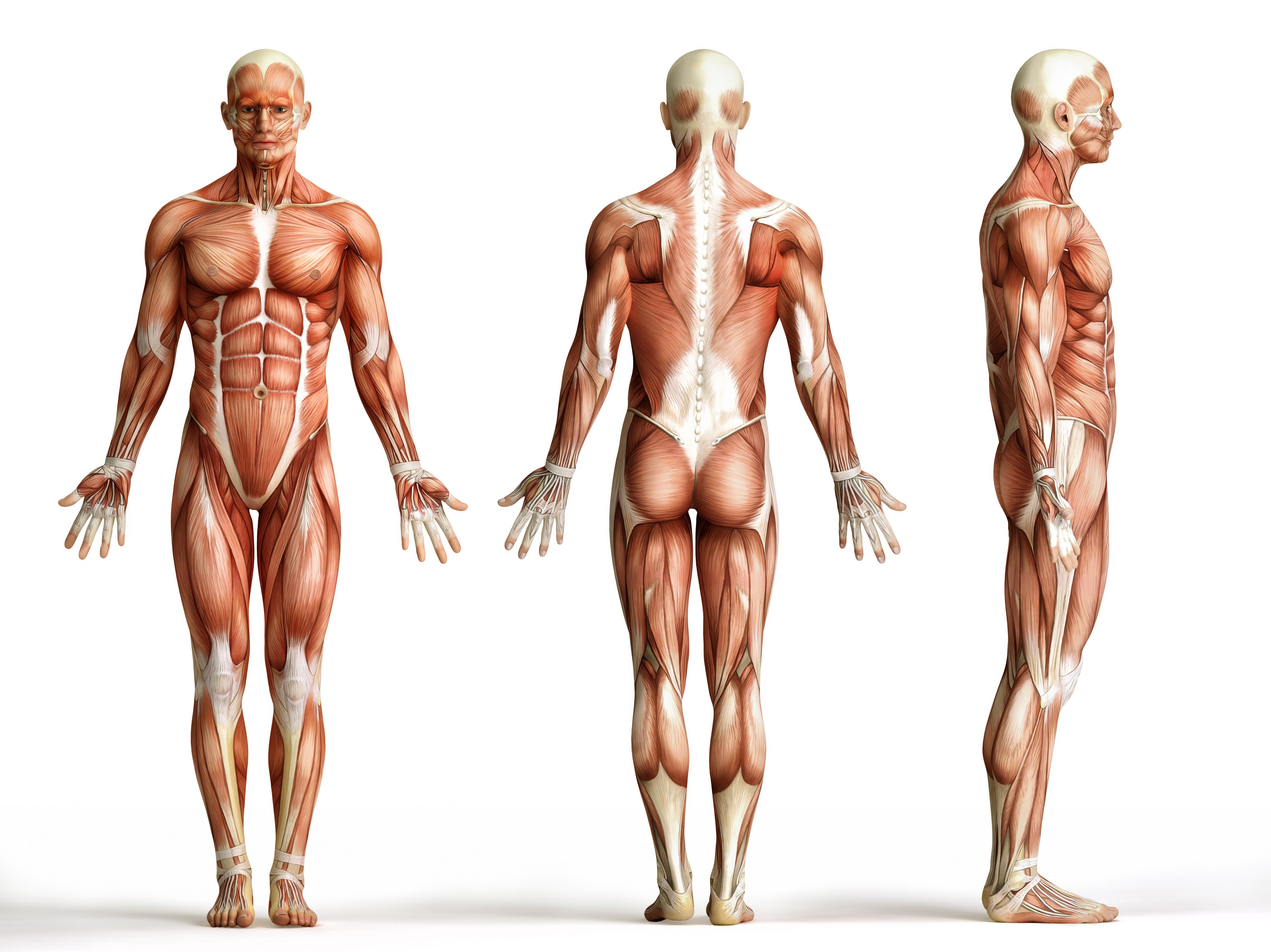 Osteopathie als Ganzkörpertherapie - Praxis Dres. Krist und Dr. Winklmann